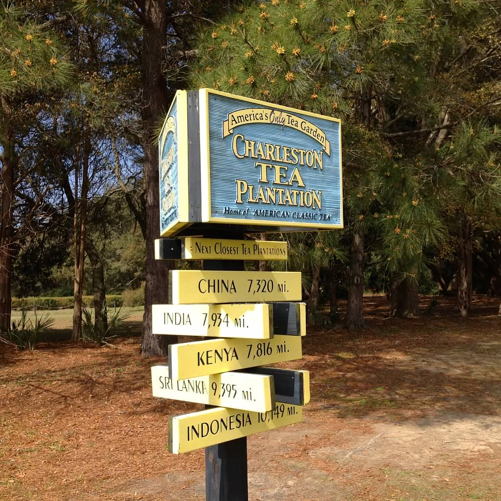 More Fun For Visitors - The Road to Charleston Tea… - The ...