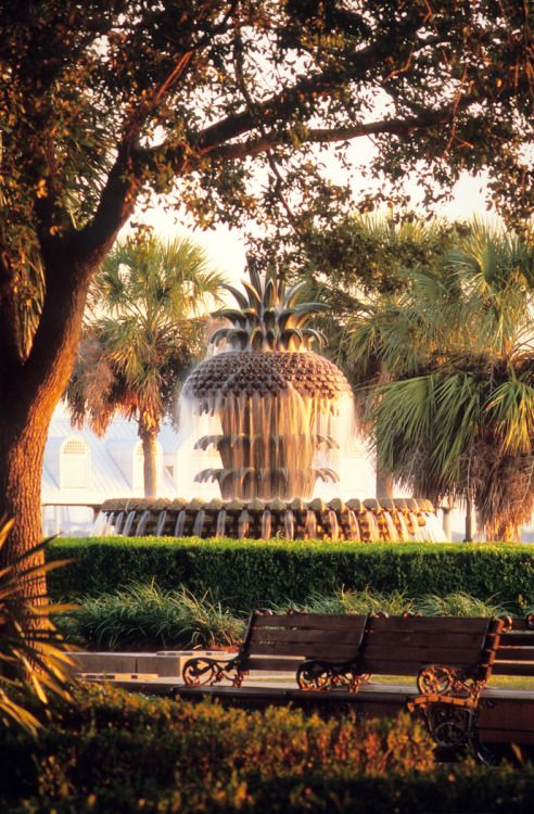 Great Charleston Sc Images From Pinterest Charleston Daily