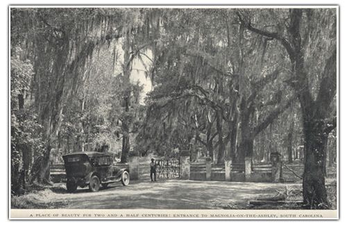 Magnolia Plantation 1920's