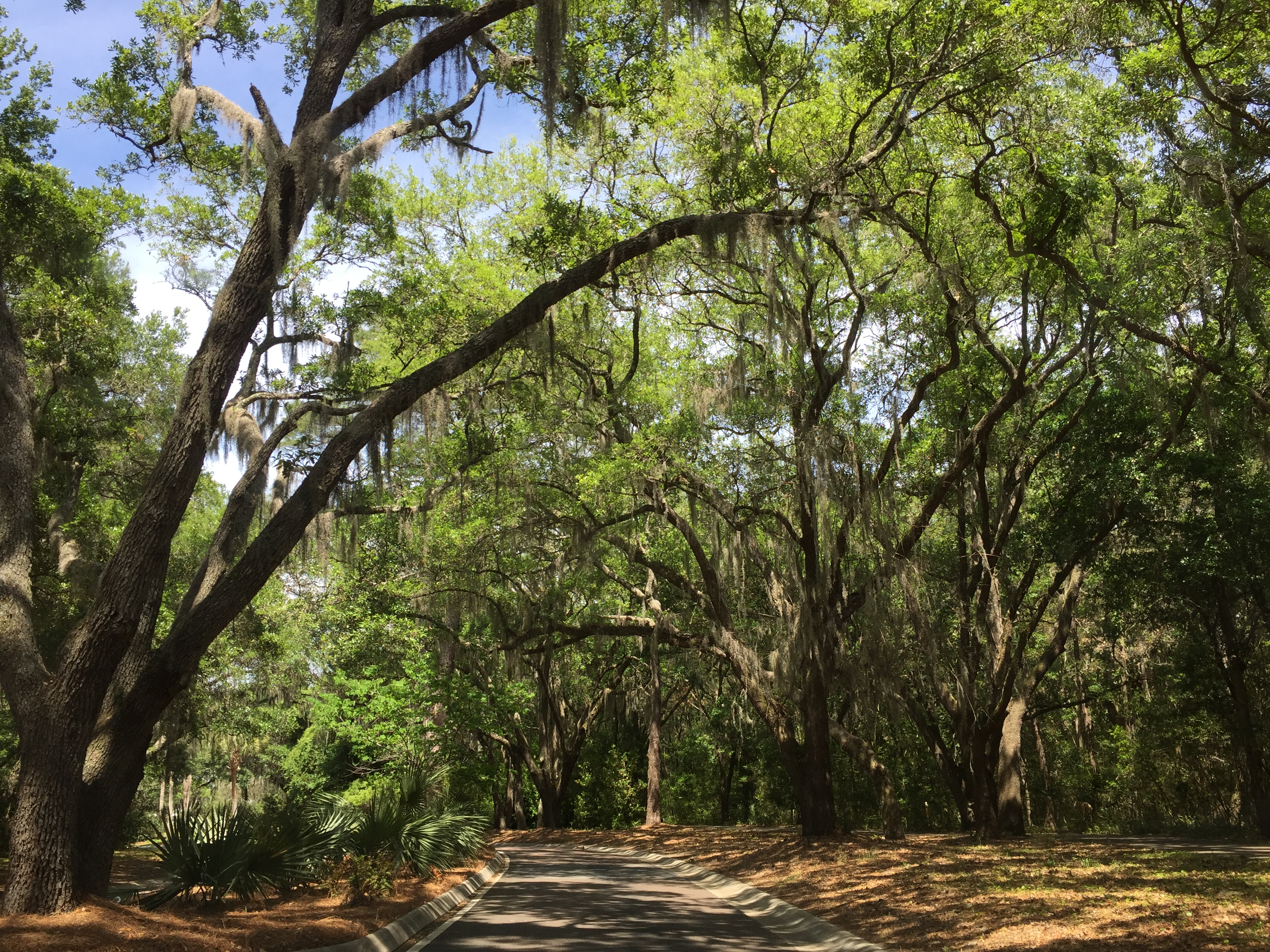 GALLERY: Seabrook Island – A Great Lowcountry Escape Right in Your ...